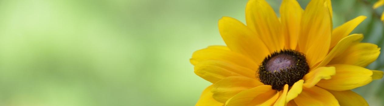 Spring-Flowers-086crop